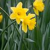 Fotograaf: Valesca. Thema: Kleurrijke lente