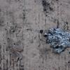 Fotograaf: Peter. Thema: Afval in Roosendaal