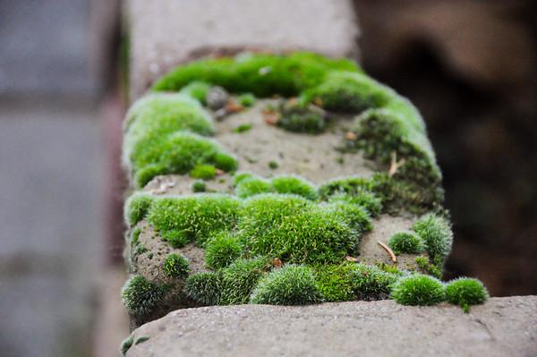 Fotograaf: Inge. Thema: De Kracht van de Natuur