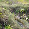 Fotograaf: Ursula. Thema: De kracht van de natuur.