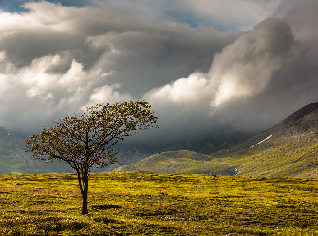 Lonely tree on Campo Imperatore, Abruzzo