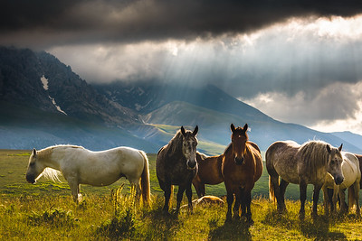 Horses on Campo Imperatore