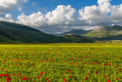 Flowers and Castelluccio, Umbria