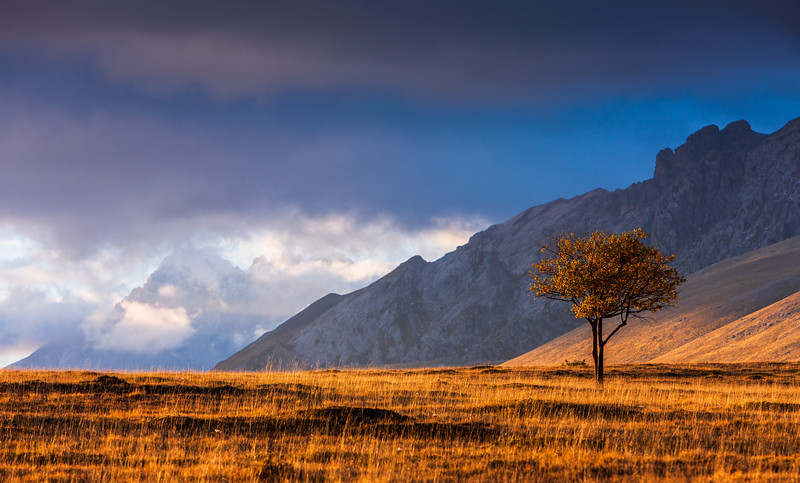 Lonely Tree in Campo Imperatore