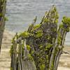 Moss on Dead Stumps