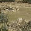 West Thumb Geyser Basin Mud Pots