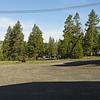Bison Near Old Faithful Cabins