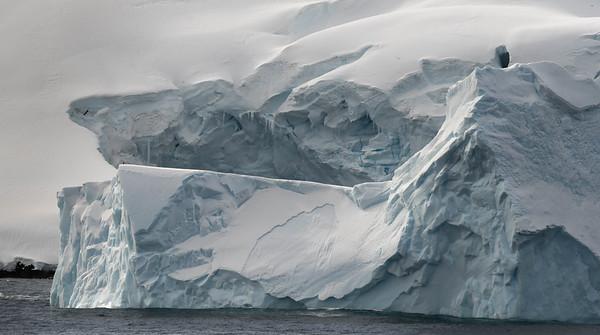 Cierva Cove Ice and Albatros