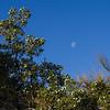Mesquite & Moon