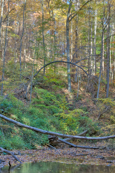 View up the Hillside below Blue Hen Falls.