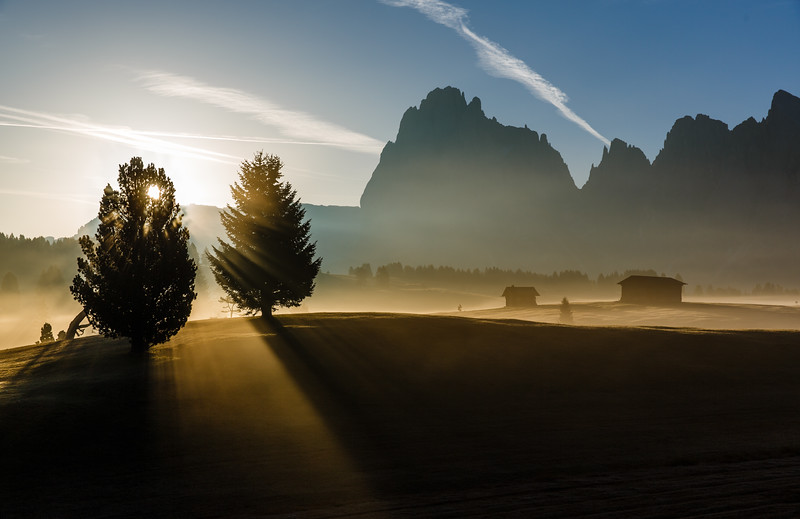 Trees with light in Alpe di Siusi