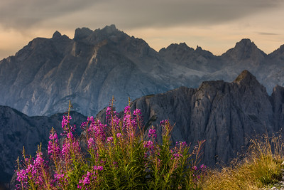 Flowers at Tre Cime