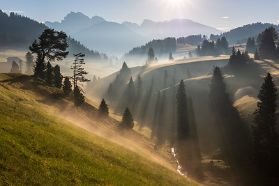 The stream and crooked tree in Alpe di Siusi
