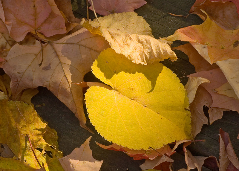 Macro of some fallen leaves.  The light fell nicely on this one.