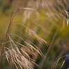 david andersons shallow depth of field grass image shot on 70mm at f5.6
