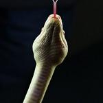 Tim K Snake 4