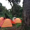 Mti Mkubwa - Big Tree Campsite