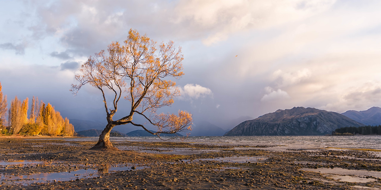 That Lone Damp and Windblown Tree