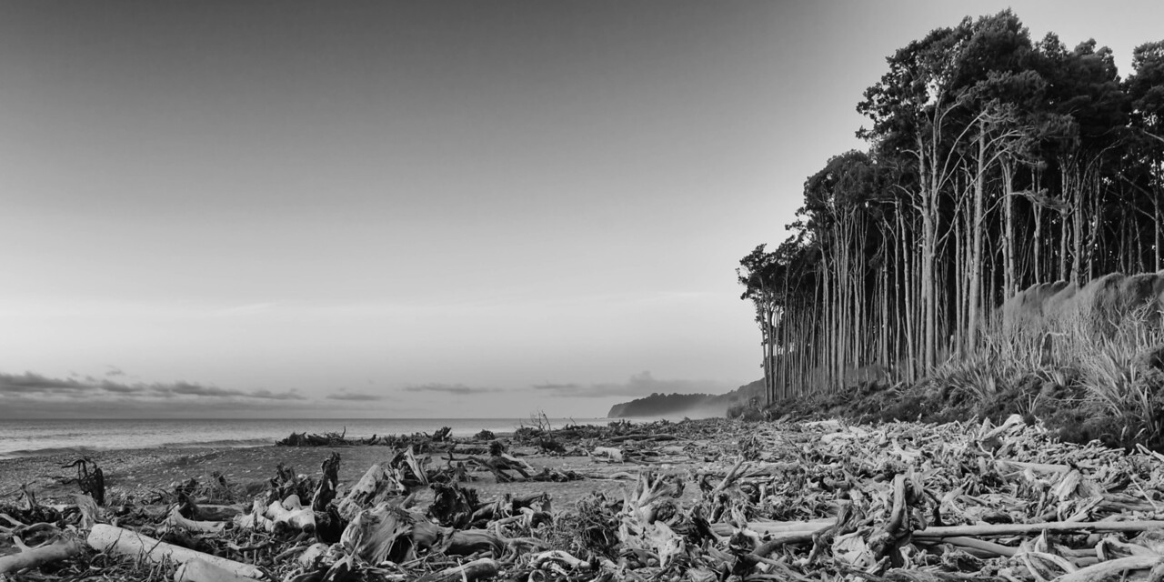 Bruce Bay Rimu Rainforest