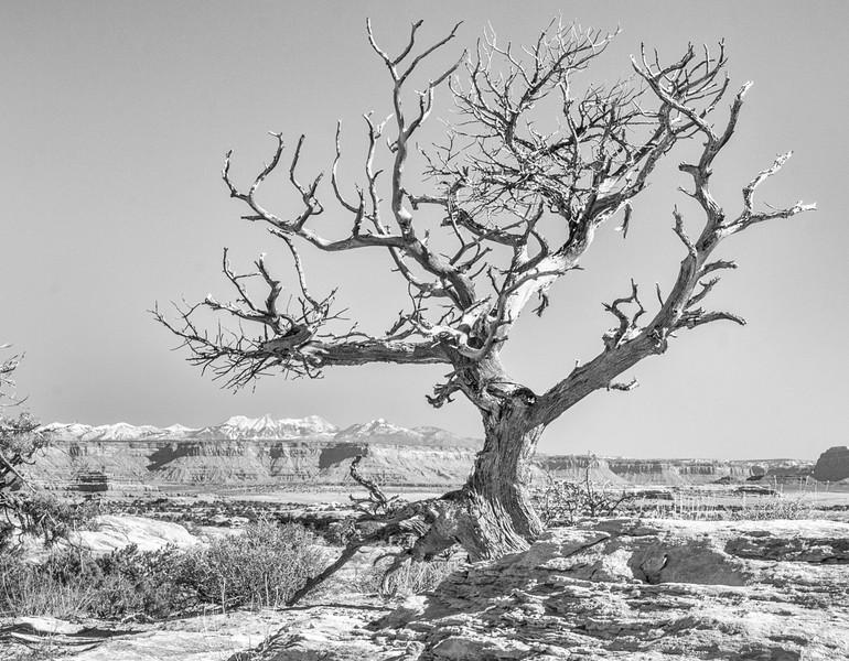 Canyonlands 385