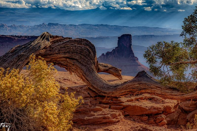 Canyonland View