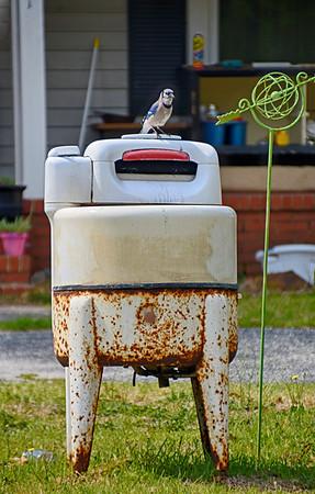 Quirky_Yard Art or Birdbath_Diane McCall