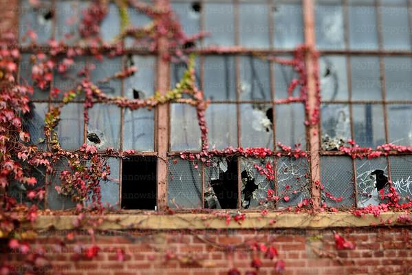 Broken Windows & Creeping Vines