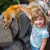 Little Cupcake petting Fox pelt