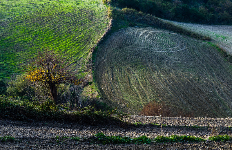 Sicilian fields and lonely tree