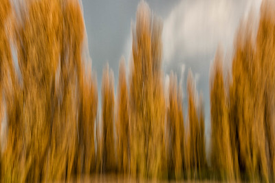 "Wanaka falll colors ""blurred perspective""."