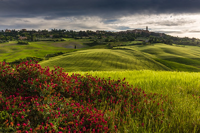 Flowers in Tuscan landscape below Pienza