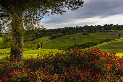 Flowers in Tuscan landscape