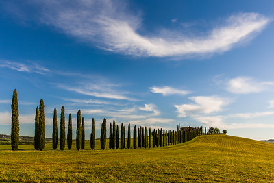 Tuscan landscape with cypresses