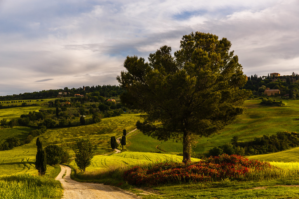 Winding road in Tuscany