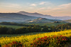 Early morning in Val d'Orcia