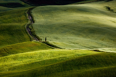 Tuscan fields in morning light