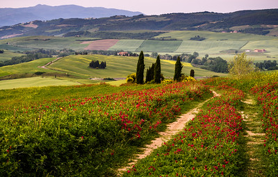 Morning walk in Tuscany
