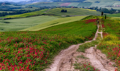 Taking a walk in the Tuscan countryside