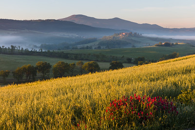 Colourful morning in Val d'Orcia