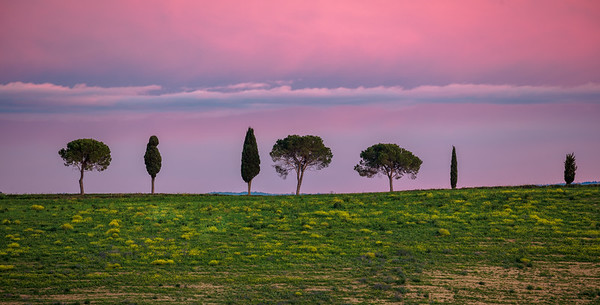 Tuscan trees at sunset