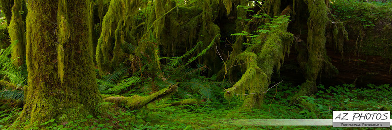 Hoh Rainforest, WA