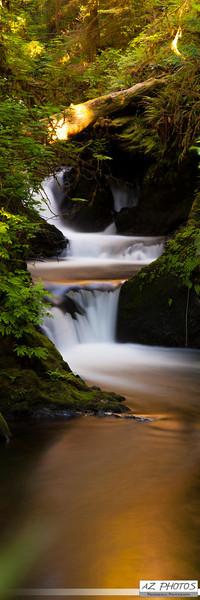 Quinault Rainforest, WA