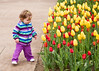 Gabby checking out the tulips at the Botanical Garden