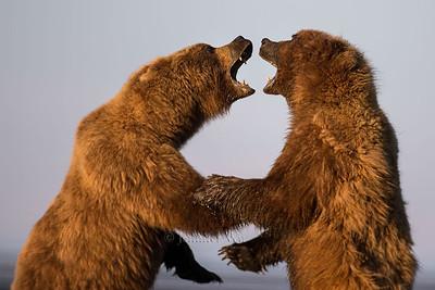 20130720_1_Bears_143