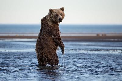 20130722_1_Bears_274