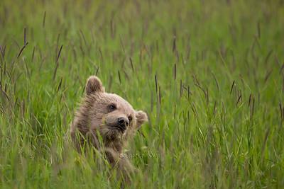 20130719_1_Bears_145_1