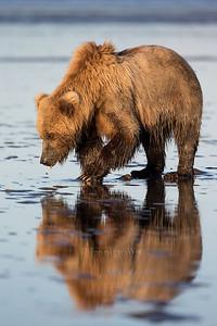 20130721_1_Bears_300