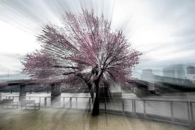 Zoom Blur