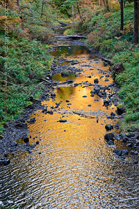 Fall reflections in North Fork Silver Creek (2008)