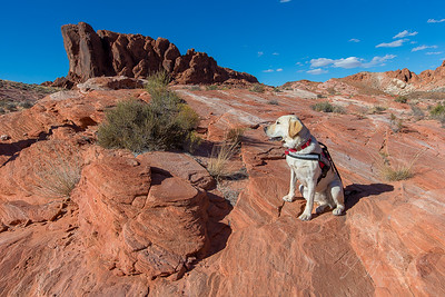 Nala at Valley of Fire